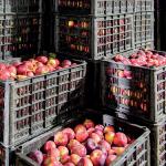 Aries e Porto di Trieste assieme alle imprese a Fruit logistica 2018