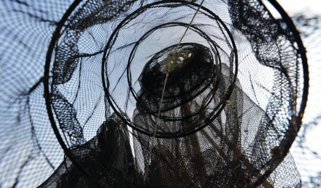 Gac Fvg: a breve erogazione contributi | Prossima uscita di un nuovo bando